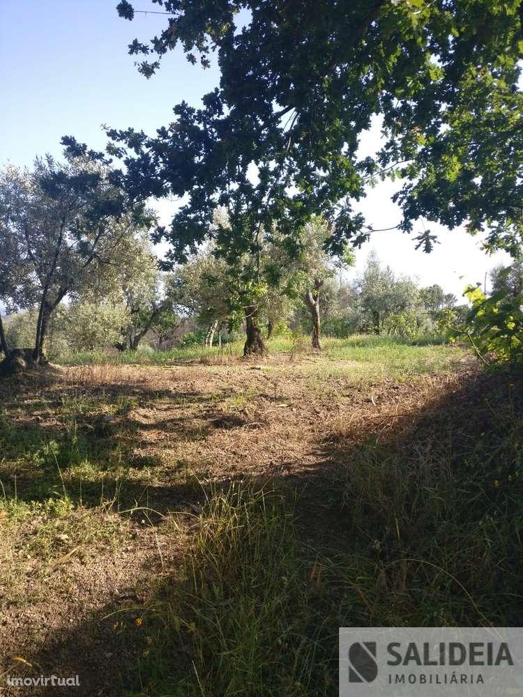 Terreno para comprar, Currelos, Papízios e Sobral, Viseu - Foto 19
