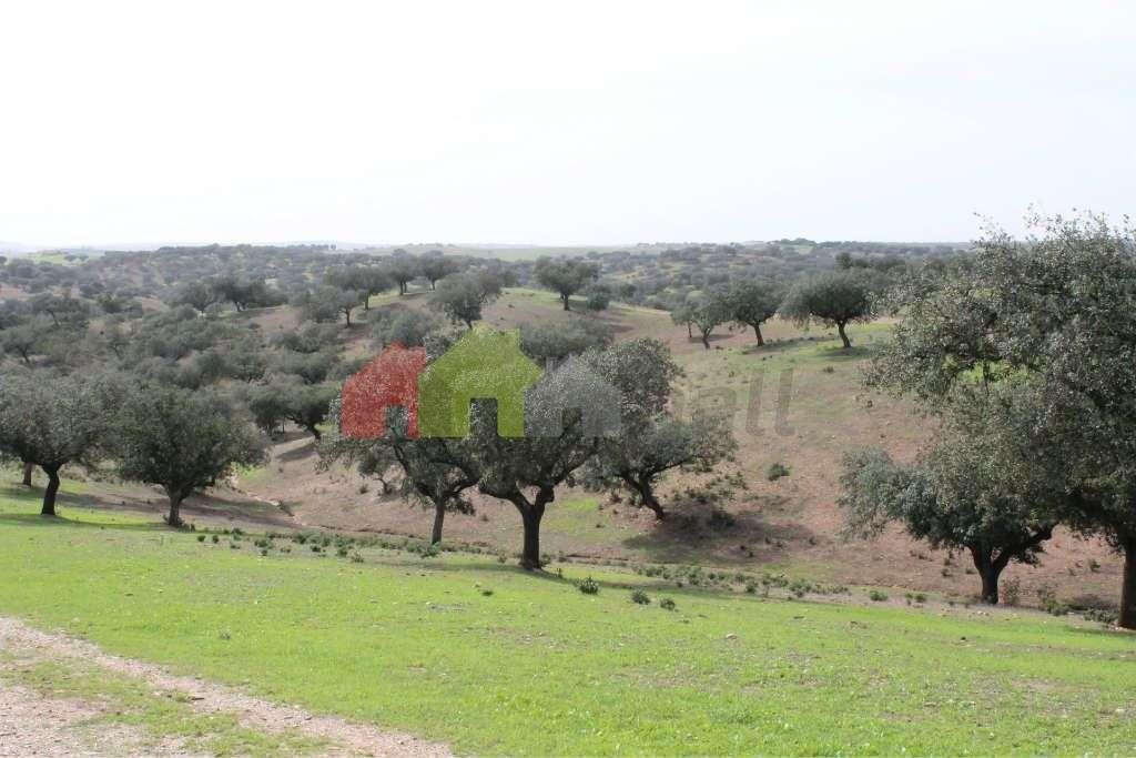 Quintas e herdades para comprar, Albernoa e Trindade, Beja - Foto 5