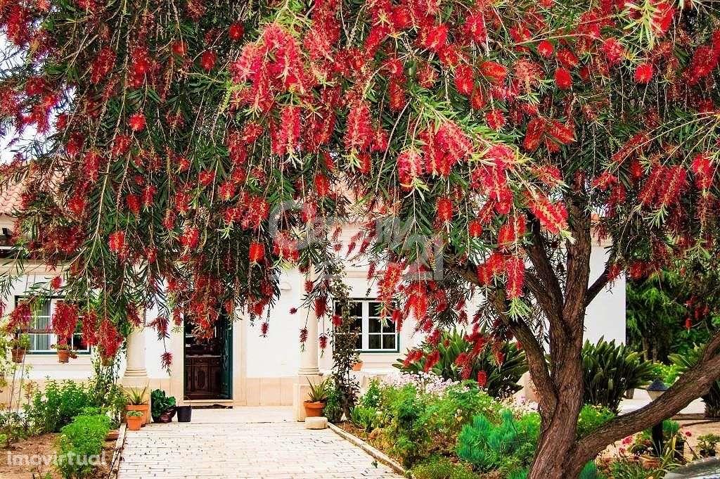 Quintas e herdades para comprar, Santiago do Cacém, Santa Cruz e São Bartolomeu da Serra, Setúbal - Foto 30
