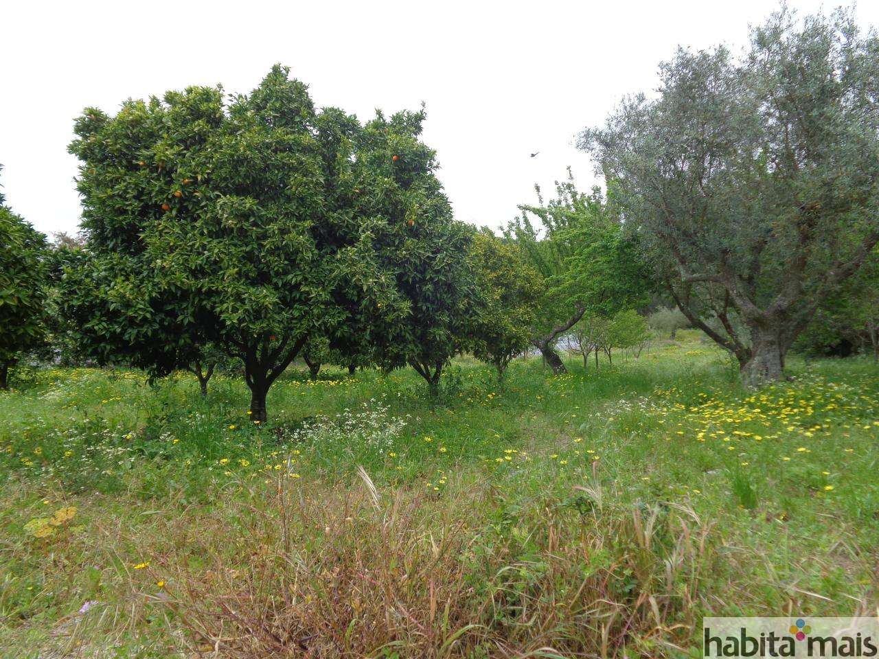 Quintas e herdades para comprar, Azeitão (São Lourenço e São Simão), Setúbal - Foto 26