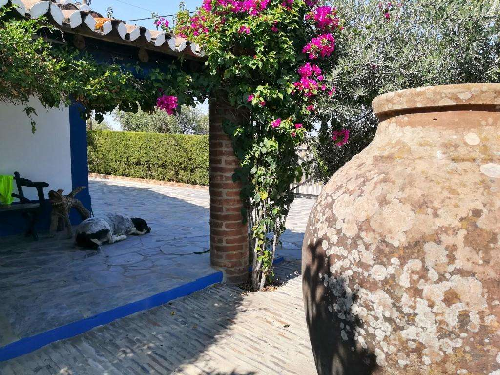 Quintas e herdades para comprar, Santo António (Capelins), Évora - Foto 49