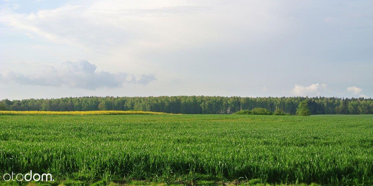 Grunt inwestycyjny 1,5 km od Mławy