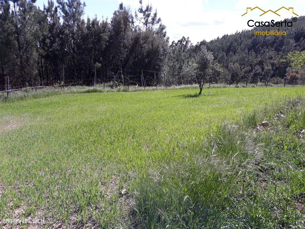 Terreno para comprar, Ermida e Figueiredo, Sertã, Castelo Branco - Foto 15