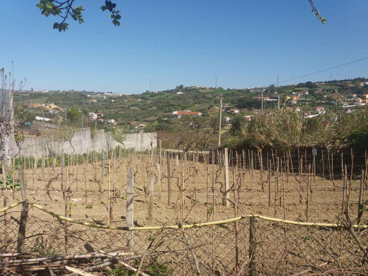 Quintas e herdades para comprar, Alhandra, São João dos Montes e Calhandriz, Vila Franca de Xira, Lisboa - Foto 5