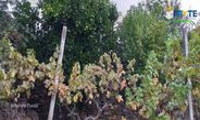 Quintas e herdades para comprar, Oleiros-Amieira, Oleiros, Castelo Branco - Foto 21