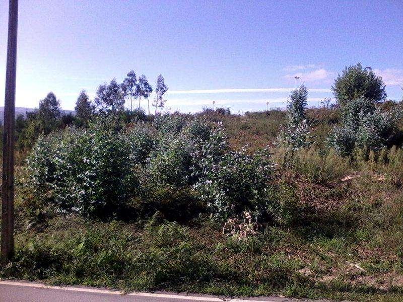 Terreno para comprar, Loivo, Viana do Castelo - Foto 5