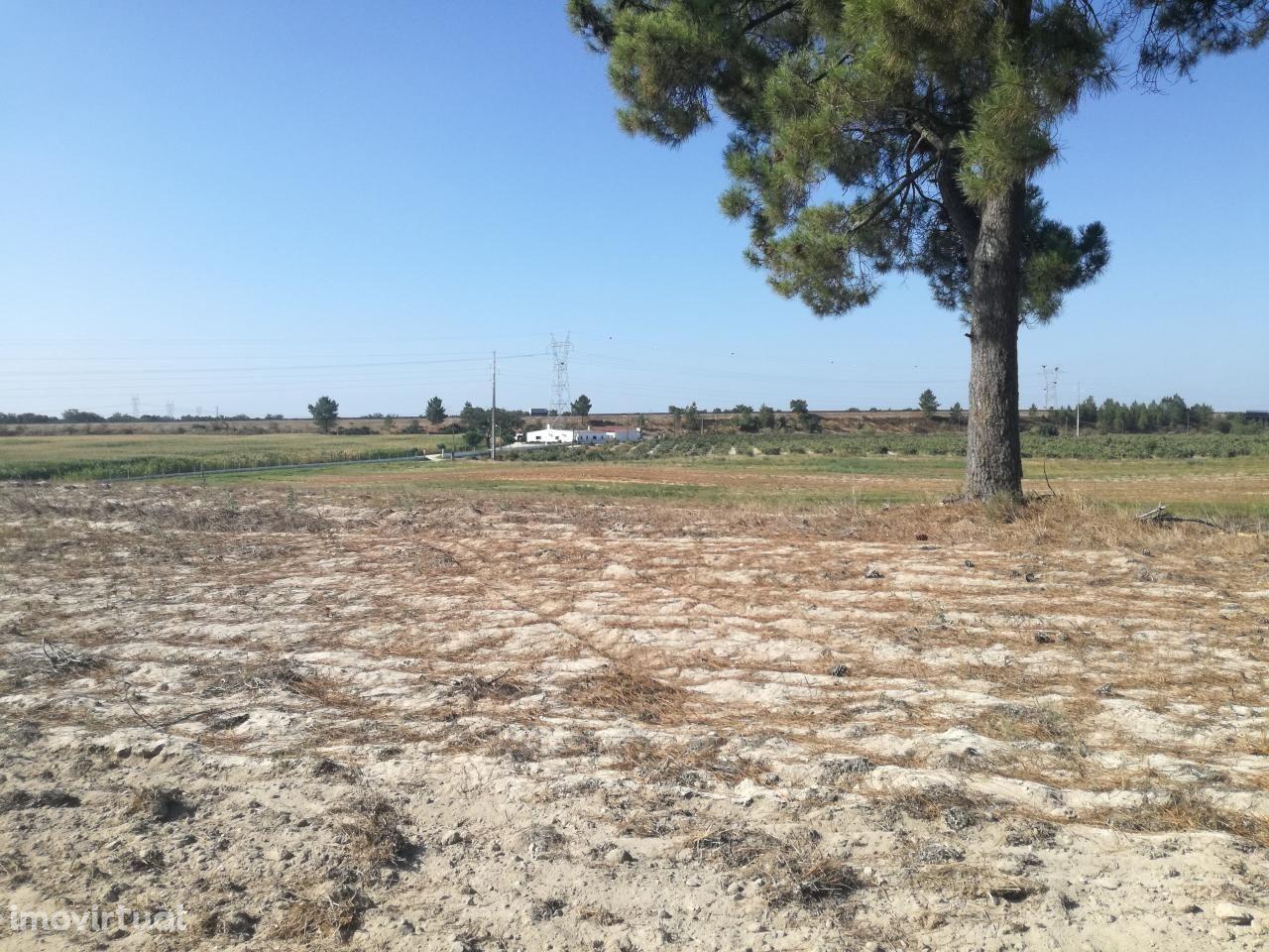 Quinta com 4 Ha localizada em Palmela Agualva de Cima