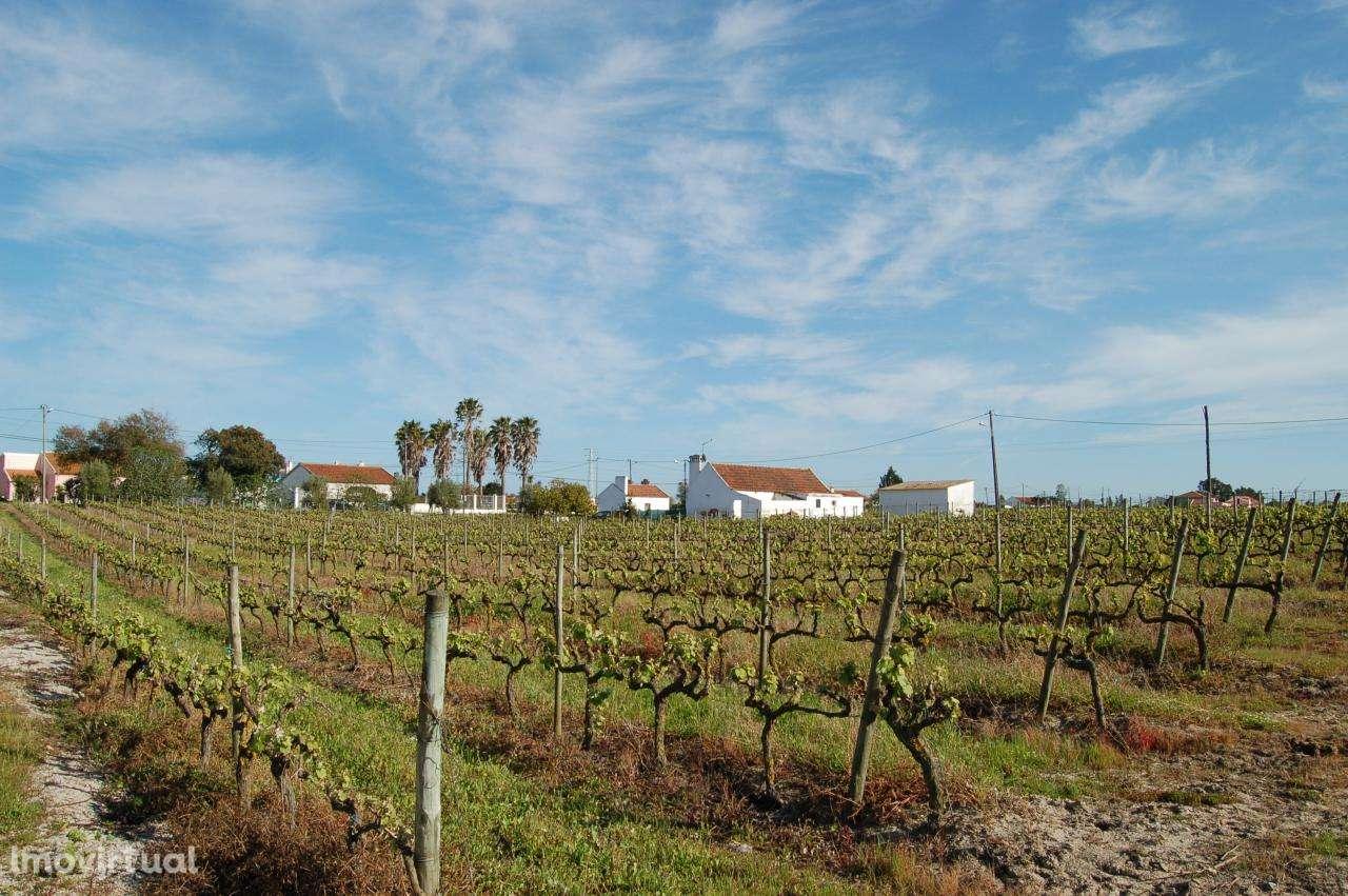 Quintas e herdades para comprar, Pinhal Novo, Setúbal - Foto 9
