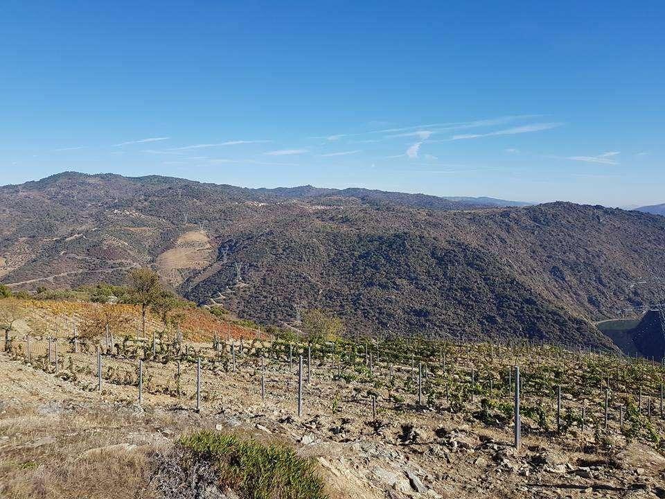 Quintas e herdades para comprar, Ervedosa do Douro, Viseu - Foto 8