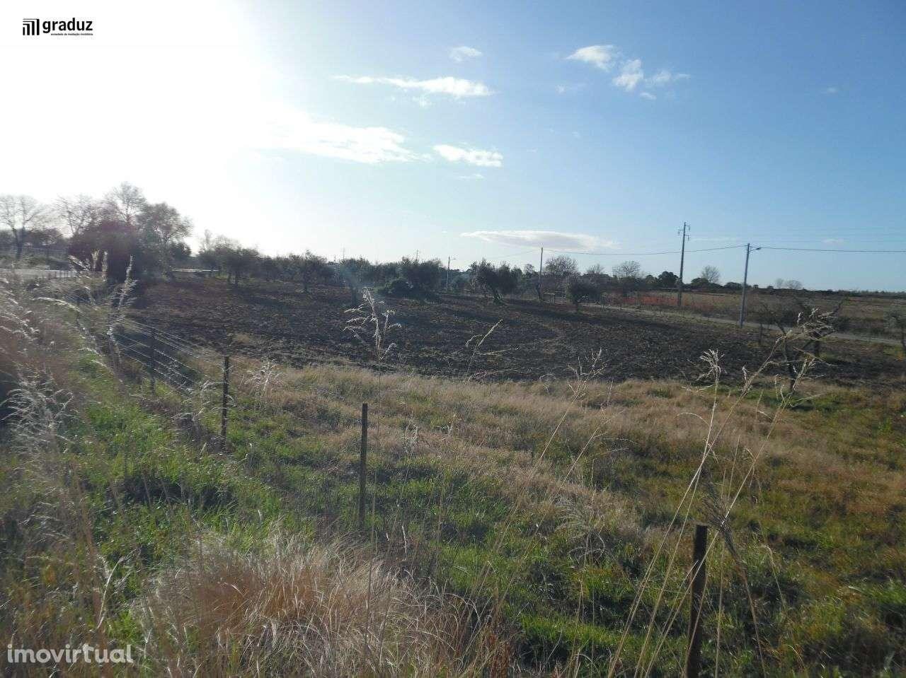 Terreno para comprar, Idanha-a-Nova e Alcafozes, Castelo Branco - Foto 6