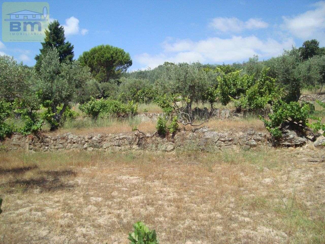Quintas e herdades para comprar, Almaceda, Castelo Branco - Foto 35