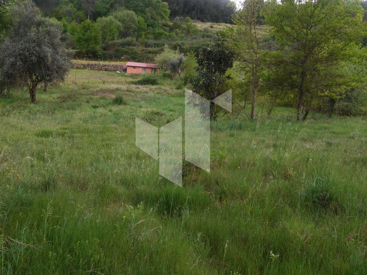 Terreno para comprar, Tonda, Tondela, Viseu - Foto 3