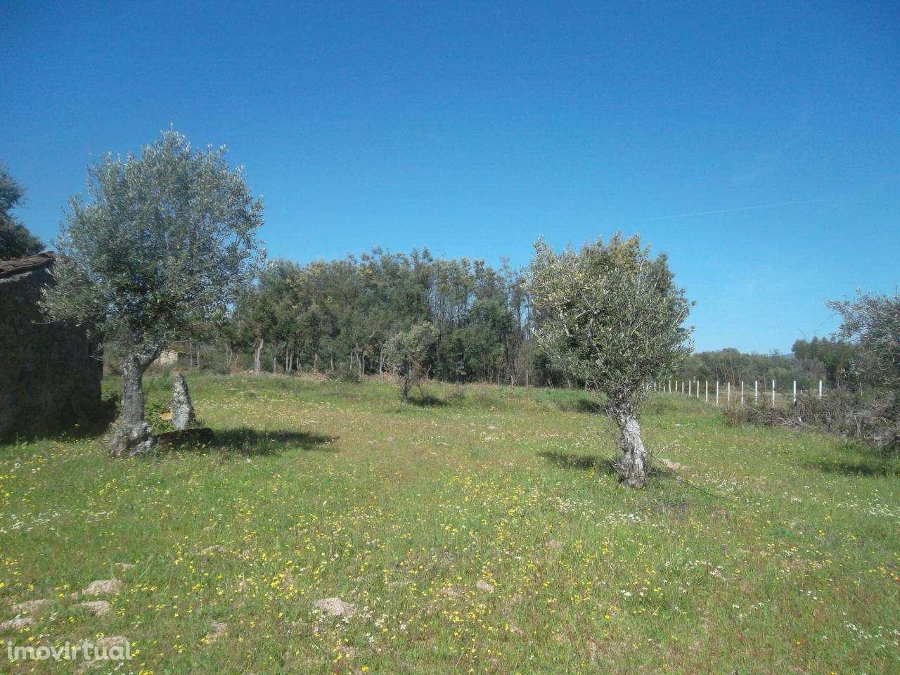 Quintas e herdades para comprar, Lardosa, Castelo Branco - Foto 8