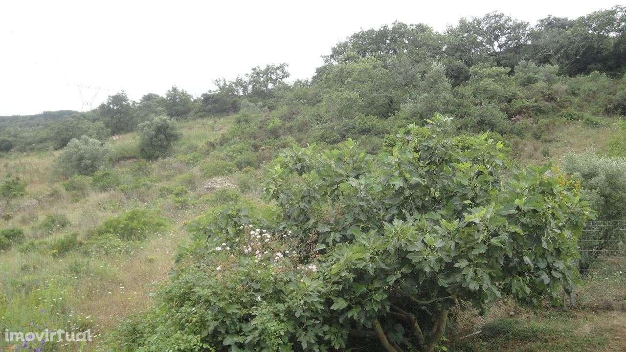 Quintas e herdades para comprar, Palmela - Foto 6