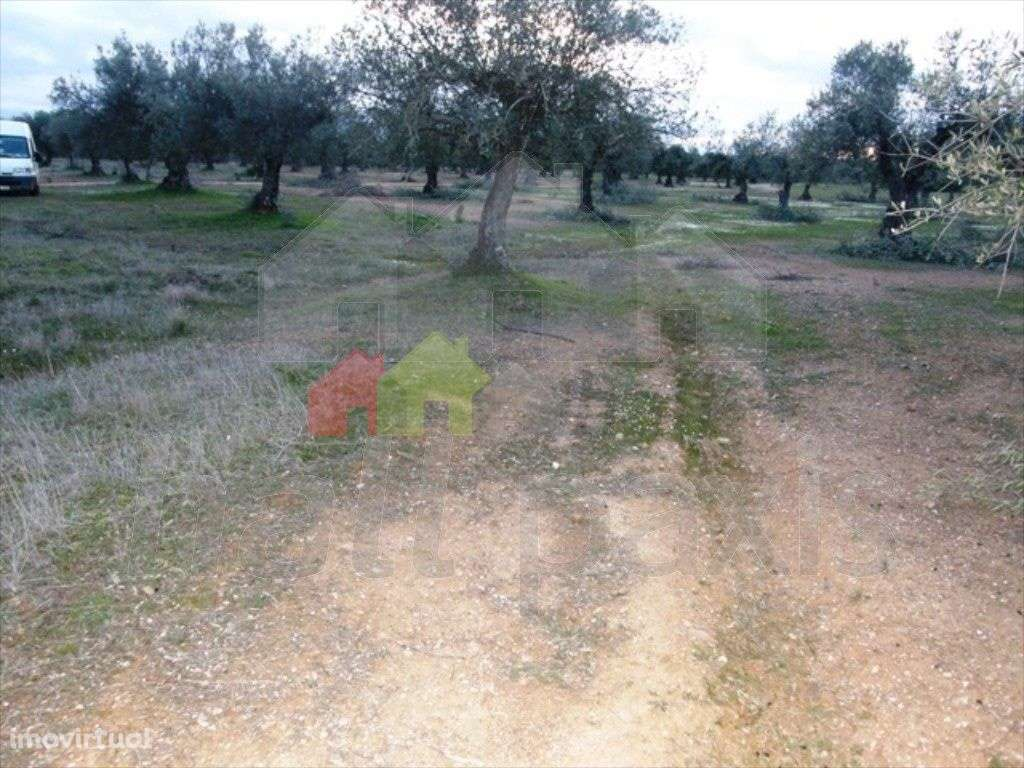 Terreno para comprar, Vila Nova de São Bento e Vale de Vargo, Serpa, Beja - Foto 7