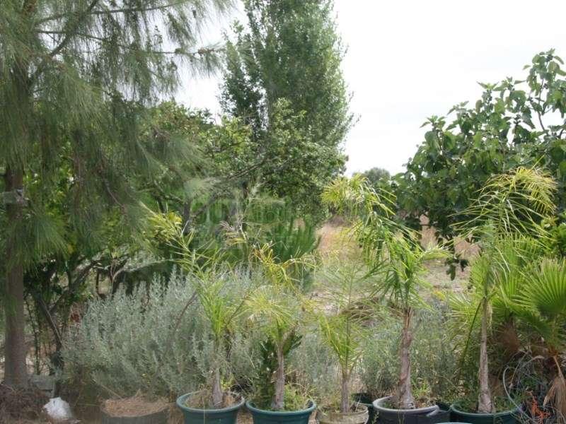 Terreno para comprar, Pinhal Novo, Setúbal - Foto 35