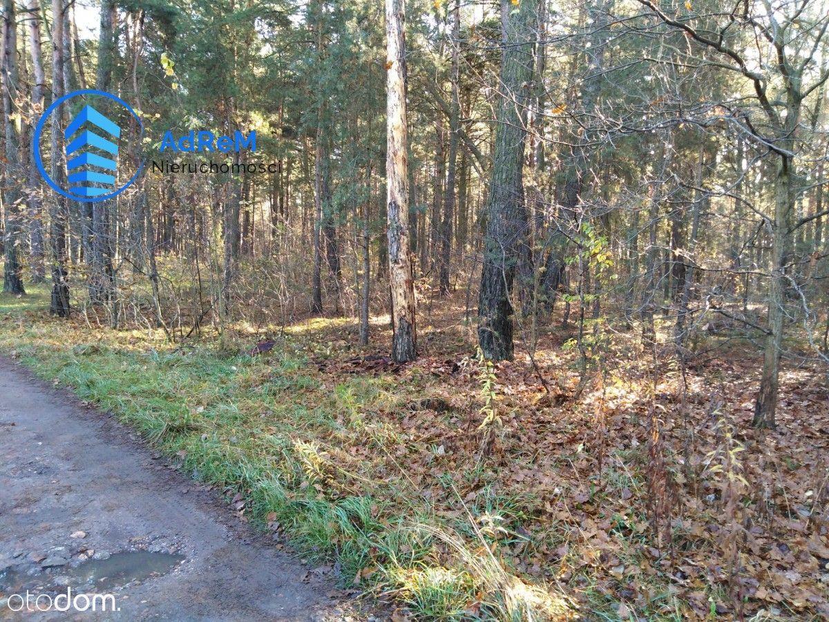 Działka leśna w Jeziórku.