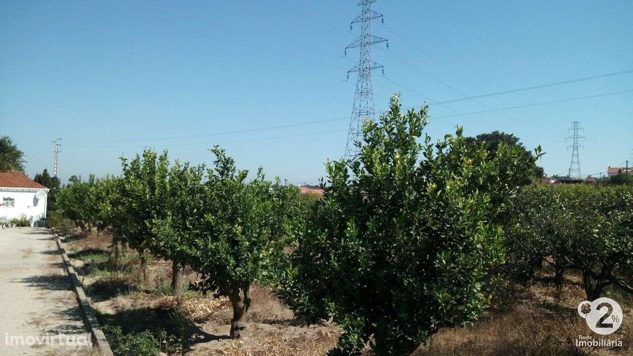 Quintas e herdades para comprar, Palmela, Setúbal - Foto 17
