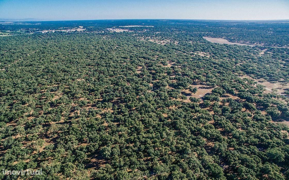 Herdade 165 hectares