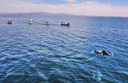 Moradias para férias, Guia, Albufeira, Faro - Foto 36