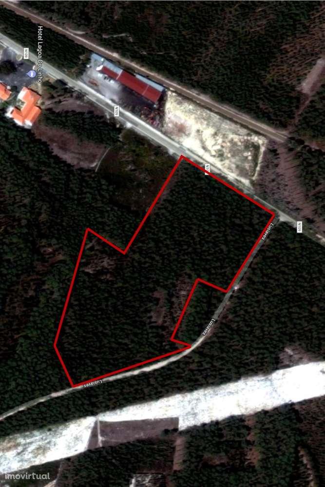Terreno para comprar, Guia, Ilha e Mata Mourisca, Pombal, Leiria - Foto 1
