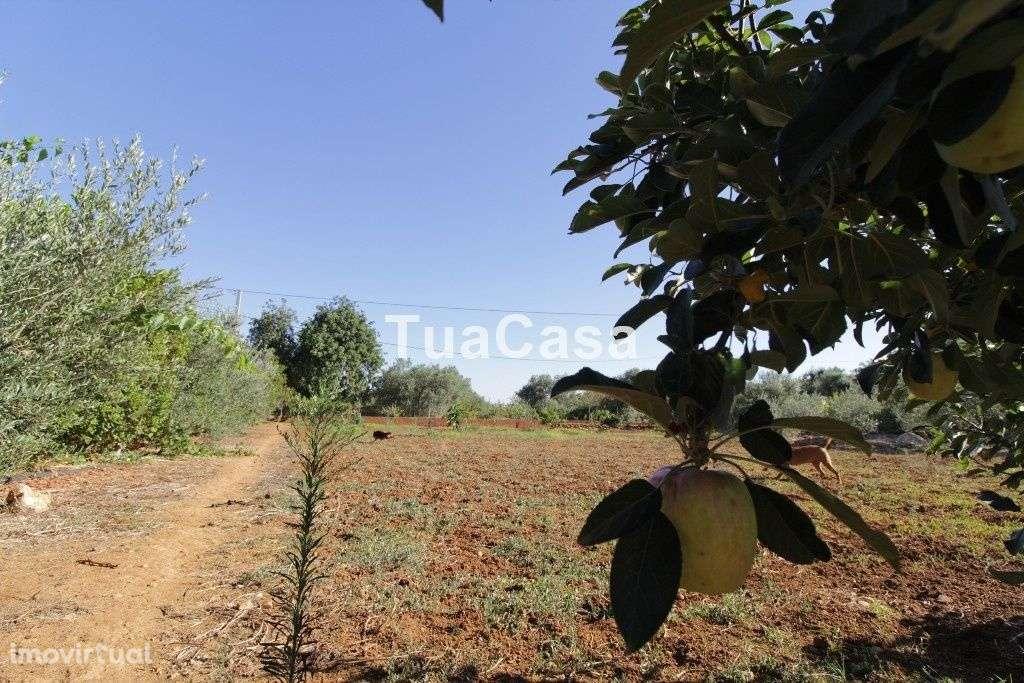 Quintas e herdades para comprar, Moncarapacho e Fuseta, Olhão, Faro - Foto 38