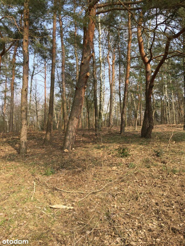 Park Krajobrazowy Wzniesień Łódzkich - Bukowiec