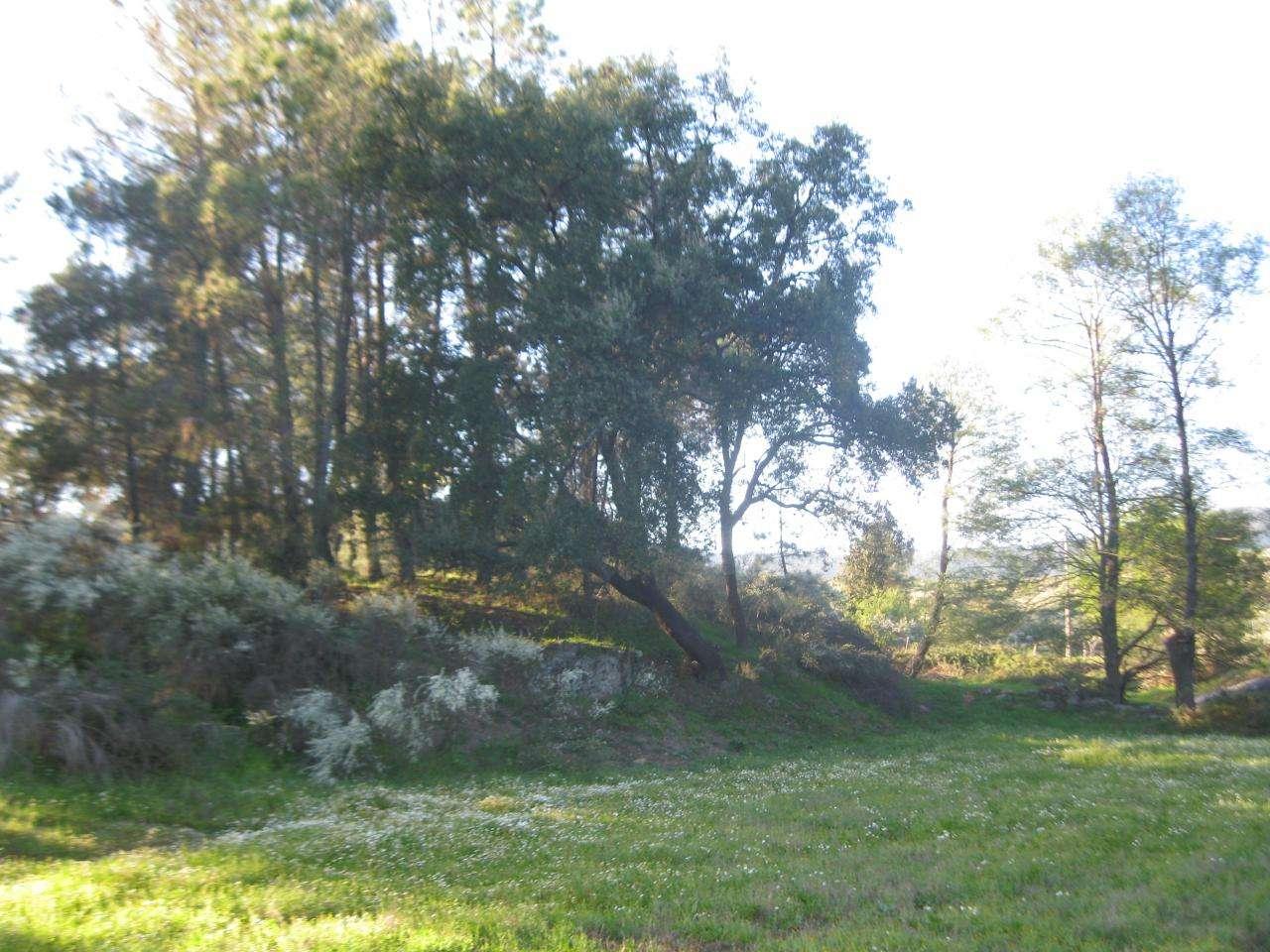 Terreno para comprar, Vale de Prazeres e Mata da Rainha, Castelo Branco - Foto 15