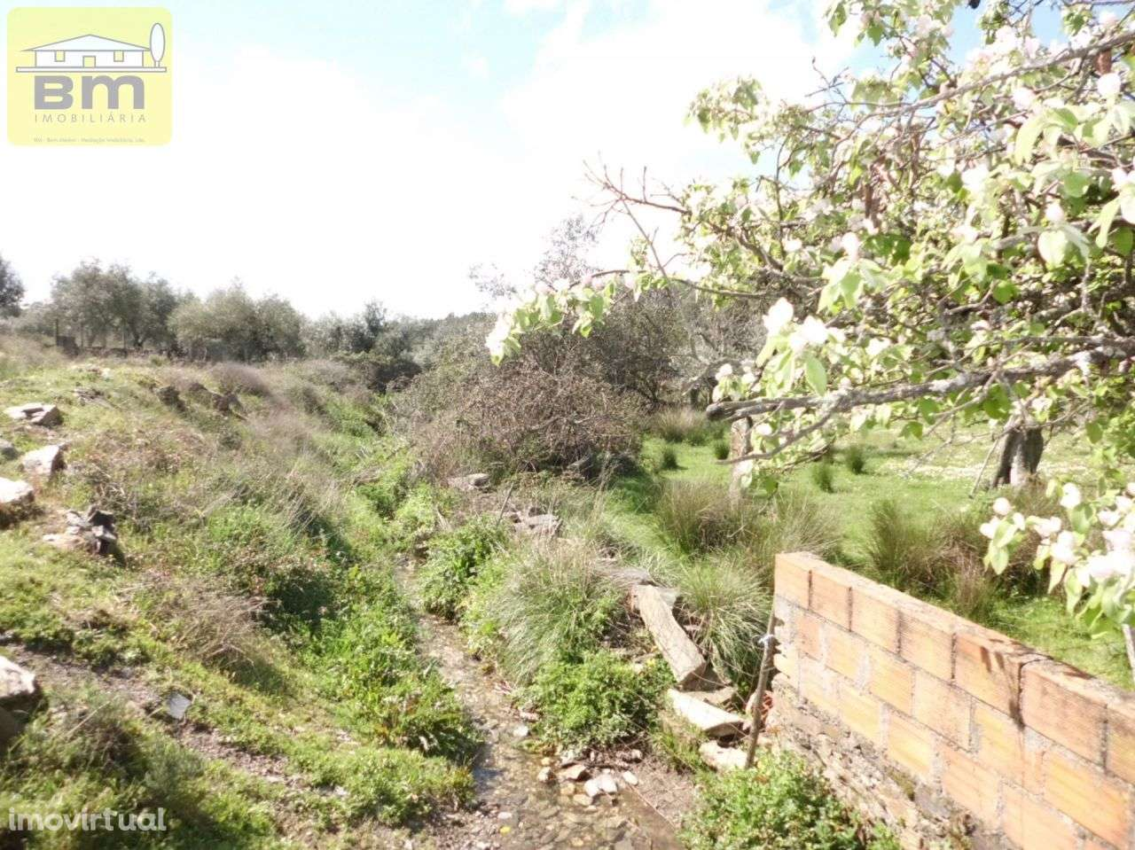 Quintas e herdades para comprar, Castelo Branco - Foto 7