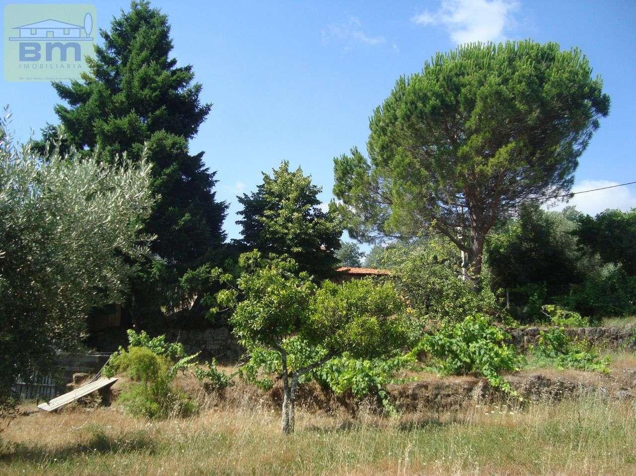 Quintas e herdades para comprar, Almaceda, Castelo Branco - Foto 28