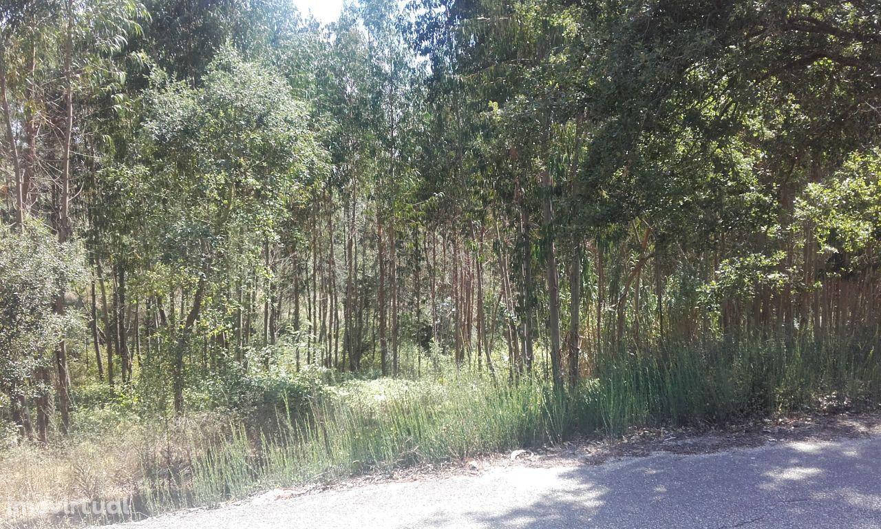 Terreno Casal Botas -Eucaliptal com 38000m2
