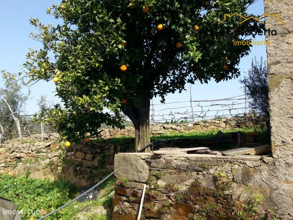 Terreno para comprar, Ermida e Figueiredo, Sertã, Castelo Branco - Foto 9