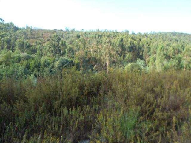 Terreno para comprar, Campo e Sobrado, Valongo, Porto - Foto 1