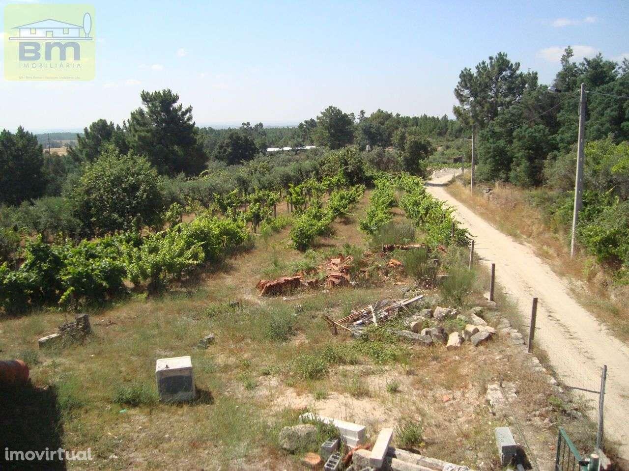 Quintas e herdades para comprar, Almaceda, Castelo Branco - Foto 7