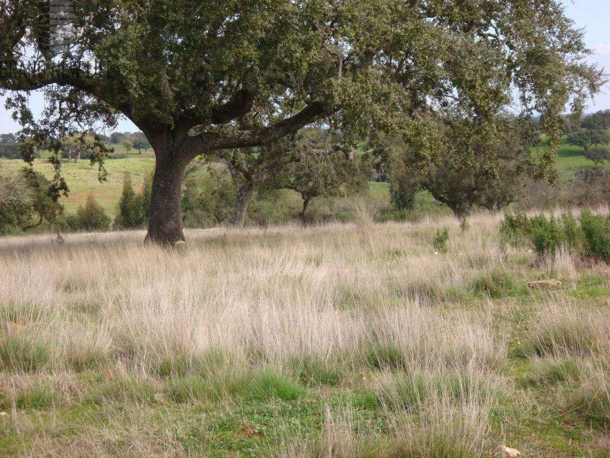 Terreno para comprar, Grândola e Santa Margarida da Serra, Setúbal - Foto 2