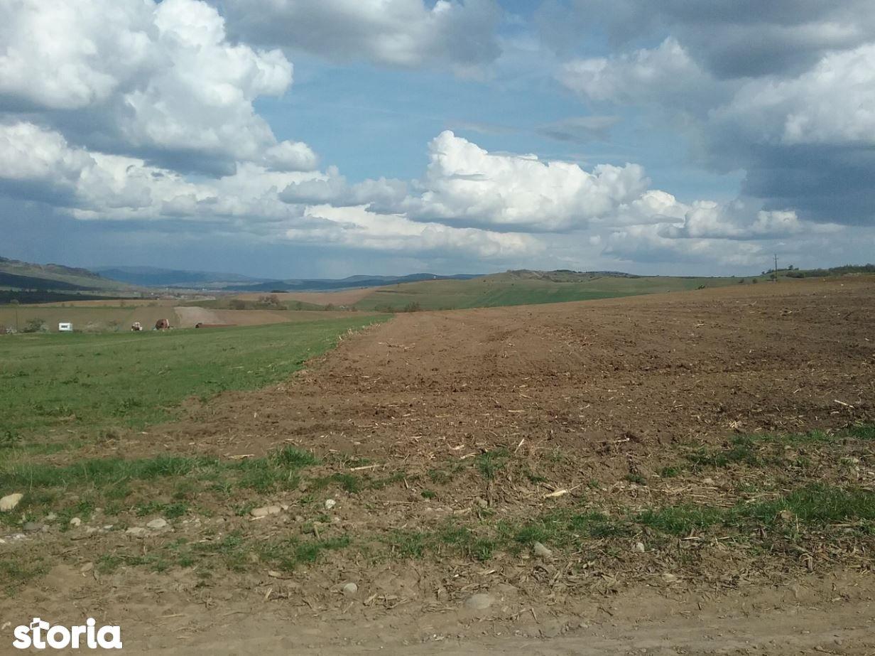 ID 16647: Teren 13,500mp Albesti / Strada Principala