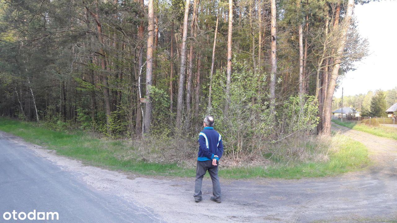 Działka leśna pod Białą Podlaską w Kolonii Lisy