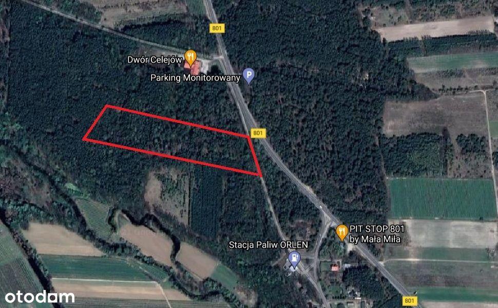 Las 2,5ha, 6,5zł/m2 Celejów gm. Wilga 50km od Wawy