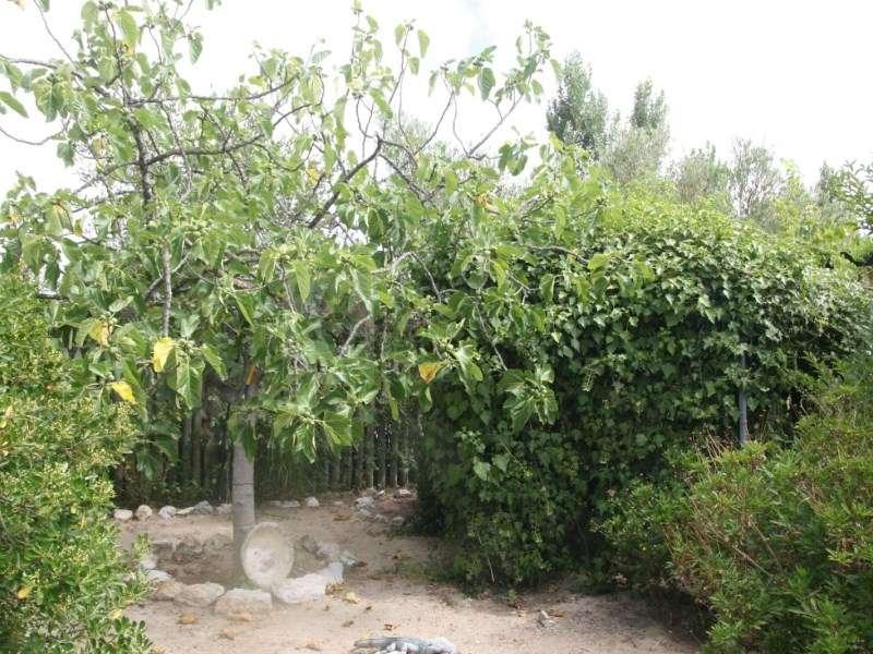 Terreno para comprar, Pinhal Novo, Setúbal - Foto 49