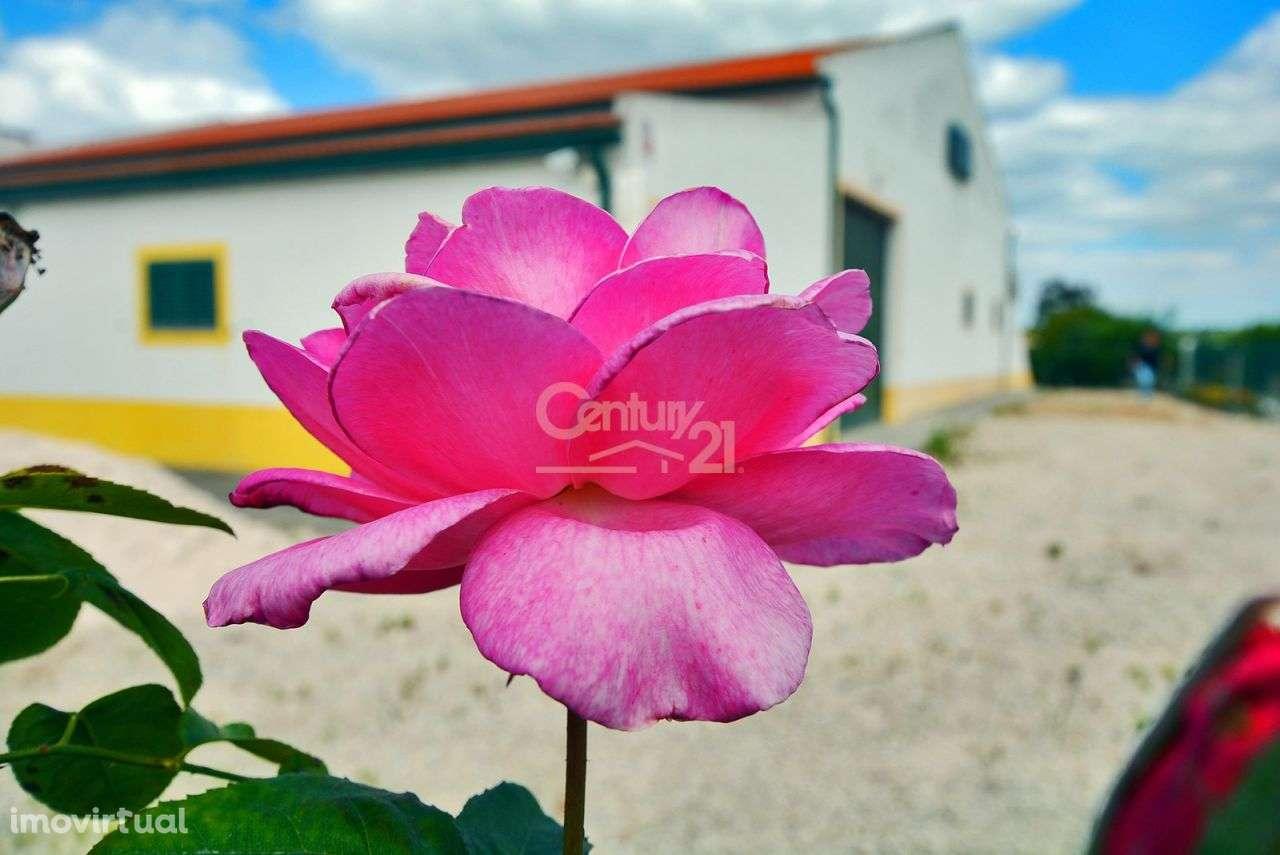 Quintas e herdades para comprar, Branca, Coruche, Santarém - Foto 28