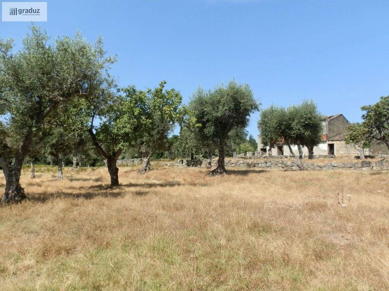 Quintas e herdades para comprar, Louriçal do Campo, Castelo Branco - Foto 24