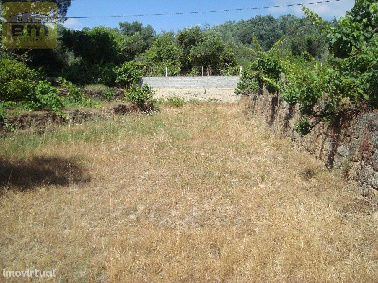 Quintas e herdades para comprar, Almaceda, Castelo Branco - Foto 27