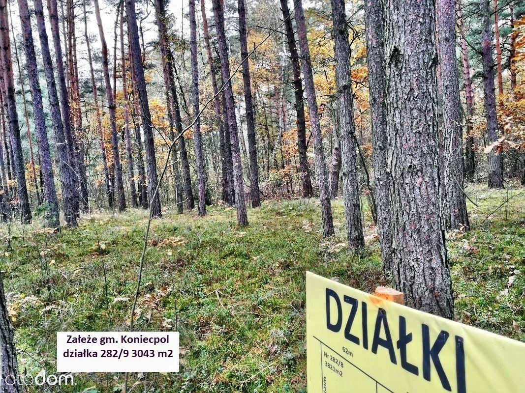 Jura tanio działka leśna 3043 m2 tylko 9.900 zł