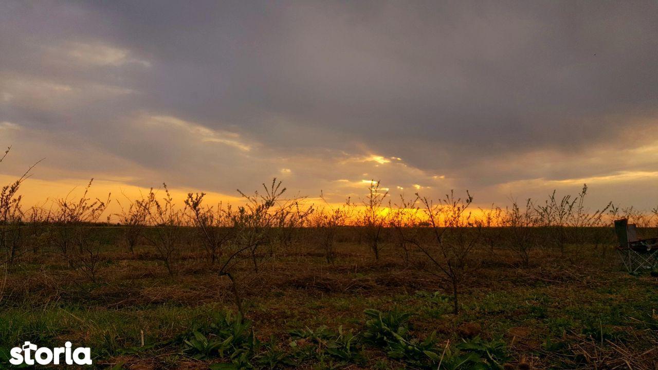 De vanzare teren 20.000 m² cu plantatie de Catina