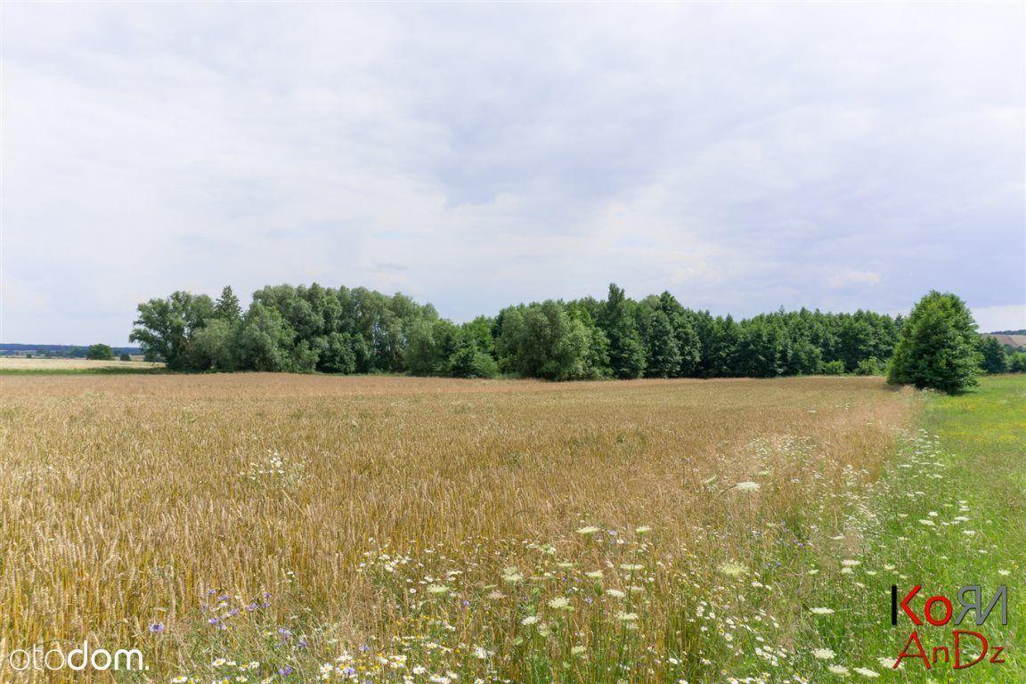Działka, 16 600 m², Putnowice-Kolonia