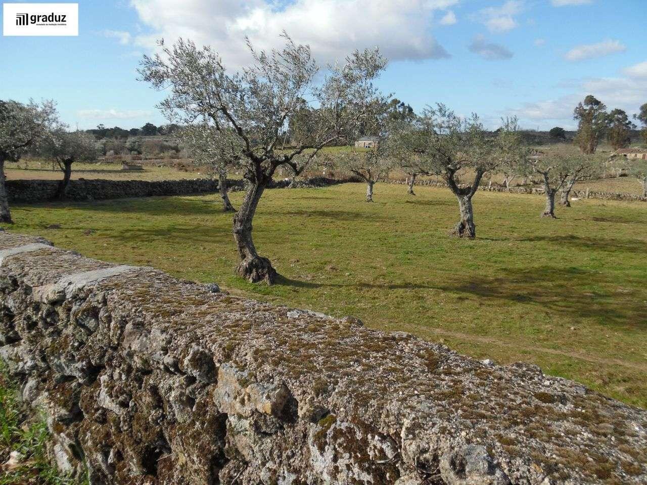 Terreno para comprar, Alcains, Castelo Branco - Foto 2