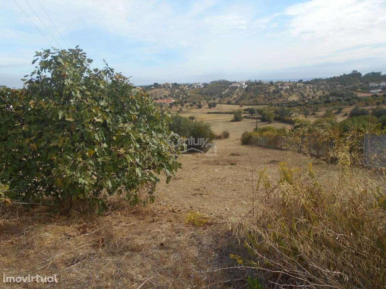 Terreno para comprar, Brogueira, Parceiros de Igreja e Alcorochel, Torres Novas, Santarém - Foto 3