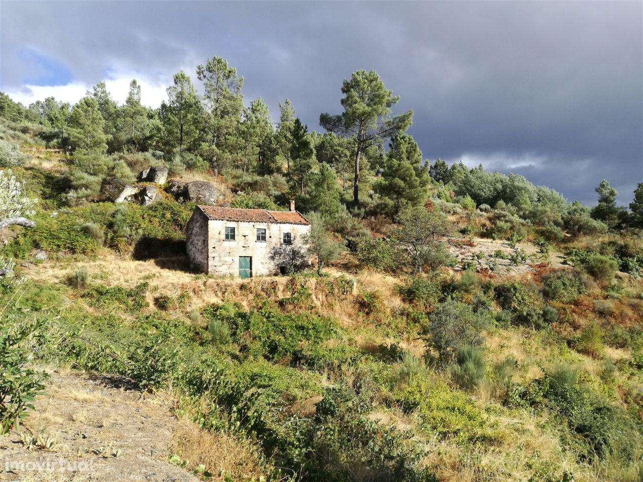 Quintas e herdades para comprar, Teixoso e Sarzedo, Castelo Branco - Foto 1