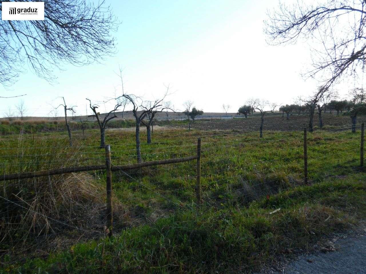 Terreno para comprar, Idanha-a-Nova e Alcafozes, Castelo Branco - Foto 2