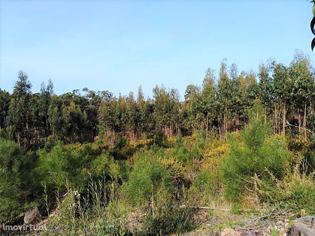 Terreno Rústico na Foz do Arelho com 1900 m2 de área de construção.